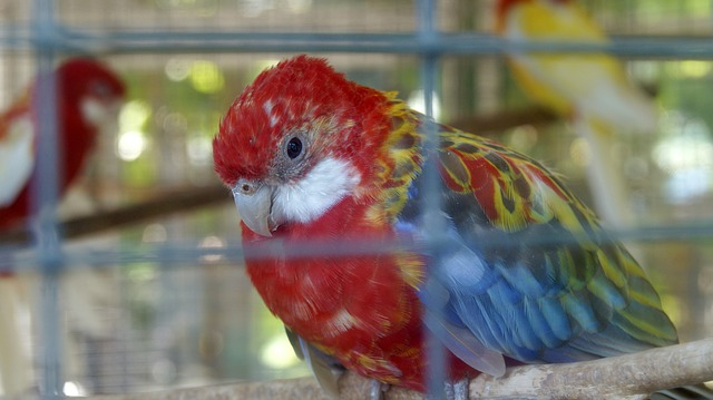 parrot in cage